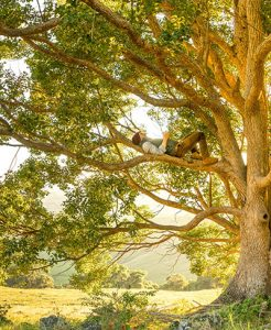 Man in tree -- what is your audience seeking?